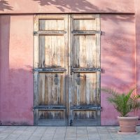 Old wooden door in vintage style on the red wall with green palm bush which is growing on the ceramic vase. Italy home style.